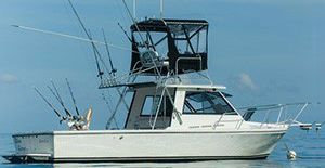 the island hopper is the right thing for party boat fishing tamarindo costa rica