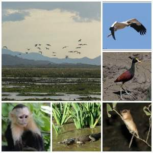 discover more than 200 palo verde national park animals