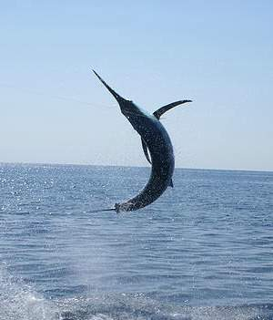 playa del coco costa rica fishing charters