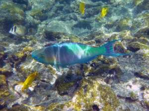 tamarindo vacation packages costa rica with snorkeling