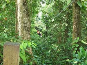 vacation packages to tamarindo costa rica with zipline